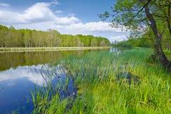 Het landschap van de lente Zoete Vlag in de Narew-Rivier Royalty-vrije Stock Afbeeldingen