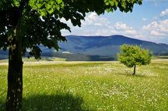 Het landschap van de de lenteaard royalty-vrije stock fotografie