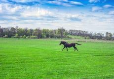 Het landschap van het de lentedorp en het lopen paard op groene gebieden stock foto