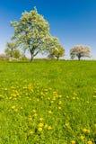 Het landschap van de lentemei in Polen Royalty-vrije Stock Foto's