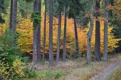 Het landschap van de meningsherfst, zuidelijke Bohemen, Tsjechische Republiek Royalty-vrije Stock Foto