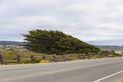 het landschap van de 17 mijlaandrijving bij vreedzame kust, Monterey, Californië Stock Afbeeldingen