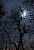 Het landschap van de nacht stock fotografie