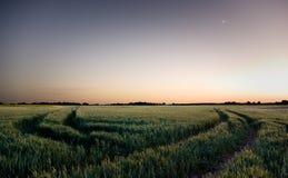 Het landschap van de nacht Royalty-vrije Stock Afbeelding