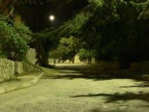 Het landschap van de nacht Maan, weg, bomen royalty-vrije stock foto's