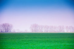 Het landschap van de nevelwinter met vallei in Roemenië Stock Foto's