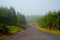 Het landschap van de ochtendmist in een bosweg van Monte Escuro Volcanic m Royalty-vrije Stock Foto