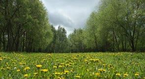 Het landschap van de paardebloem Royalty-vrije Stock Afbeeldingen