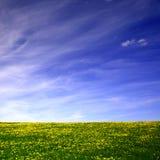 Het landschap van de paardebloem Stock Fotografie