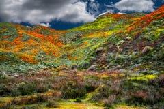 Het landschap van de Papavergebieden van Californië maakt een perfect beeld van de lente stock foto