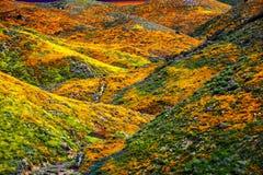 Het landschap van de Papavergebieden van Californië, zon die op plaatsen horizen het gieten a gloden gloed over kleurrijke heuvel royalty-vrije stock fotografie