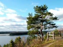 Het landschap van de pijnboom royalty-vrije stock afbeelding