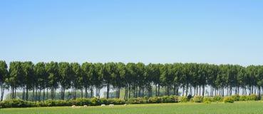 Het landschap van de polder Royalty-vrije Stock Fotografie