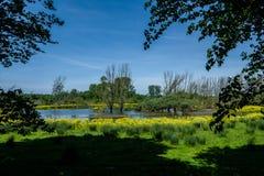 Het landschap van de polder, een recreatiegebied dichtbij Rotterdam stock foto's