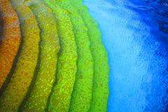 Het landschap van de pool Stock Foto