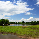 Het landschap van de prairie Stock Fotografie
