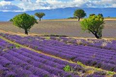 Het landschap van de Provence Royalty-vrije Stock Afbeeldingen