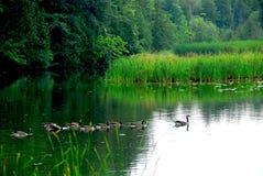Het landschap van de rivier Stock Foto