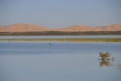 Het landschap van de rivier met woestijn Royalty-vrije Stock Fotografie