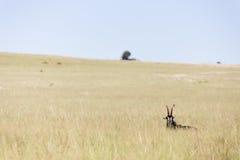 Het Landschap van de sabelmarterantilope Stock Fotografie