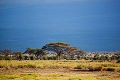 Het landschap van de savanne in Afrika, Amboseli, Kenia Stock Foto's