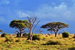 Het landschap van de savanne in Afrika, Amboseli, Kenia Stock Afbeelding