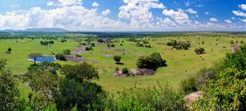 Het landschap van de savanne in Serengeti, Tanzania, Afrika Royalty-vrije Stock Afbeeldingen
