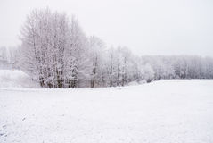 Het landschap van de sneeuw in maart Royalty-vrije Stock Foto's