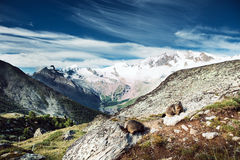 Het landschap van de sneeuwberg Stock Afbeelding
