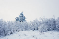 Het landschap van de sneeuwberg tijdens de winter Stock Foto