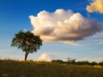 Het landschap van de steppeavond met bomen en wolken. Stock Foto