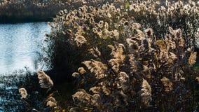 Het landschap van de Taizhouherfst stock foto