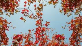 Het landschap van de Taizhouherfst stock afbeelding
