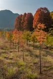 Het landschap van de Taizhouherfst royalty-vrije stock fotografie