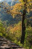 Het landschap van de Taizhouherfst royalty-vrije stock foto