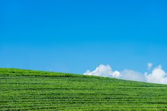 Het landschap van de theeaanplanting op blauwe hemel royalty-vrije stock foto's