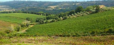 Het landschap van de Toscanywijngaard Stock Foto