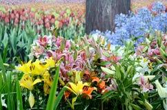 Het landschap van de tuin Stock Afbeeldingen