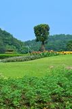 Het landschap van de tuin Stock Afbeelding