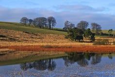 Het Landschap van de vijver Royalty-vrije Stock Afbeeldingen