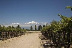 Het landschap van de wijn Royalty-vrije Stock Afbeelding