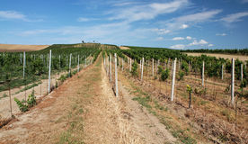 Het landschap van de wijngaard Royalty-vrije Stock Foto