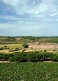 Het landschap van de wijngaard Stock Afbeelding