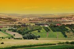 Het landschap van de wijngaard Stock Foto's