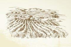 Het Landschap van de wijngaard royalty-vrije illustratie