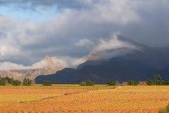Het landschap van de wijngaard Royalty-vrije Stock Foto's