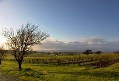 Het Landschap van de wijngaard Royalty-vrije Stock Afbeeldingen