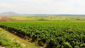 Het landschap van de wijngaard stock videobeelden