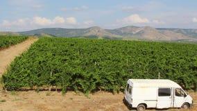 Het landschap van de wijngaard stock video