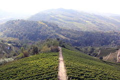 Het landschap van de wijngaard Royalty-vrije Stock Afbeelding